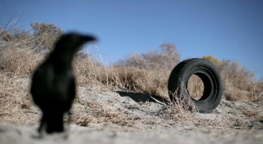 Tire bird